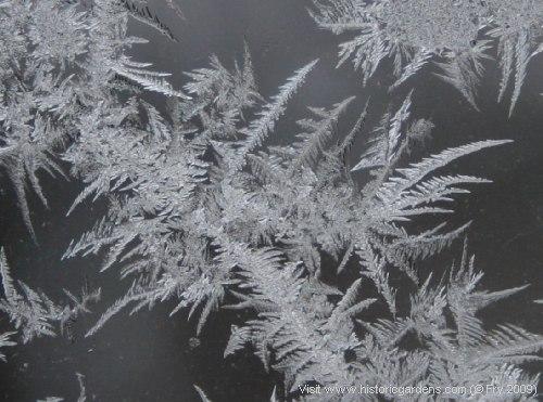 Jack Frost's Artwork